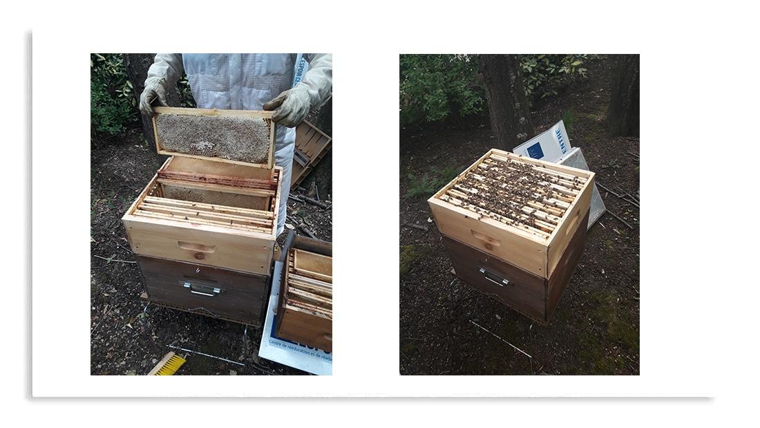 apiculture centre l'espoir