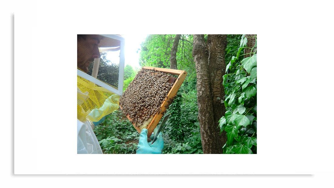 abeille espoir
